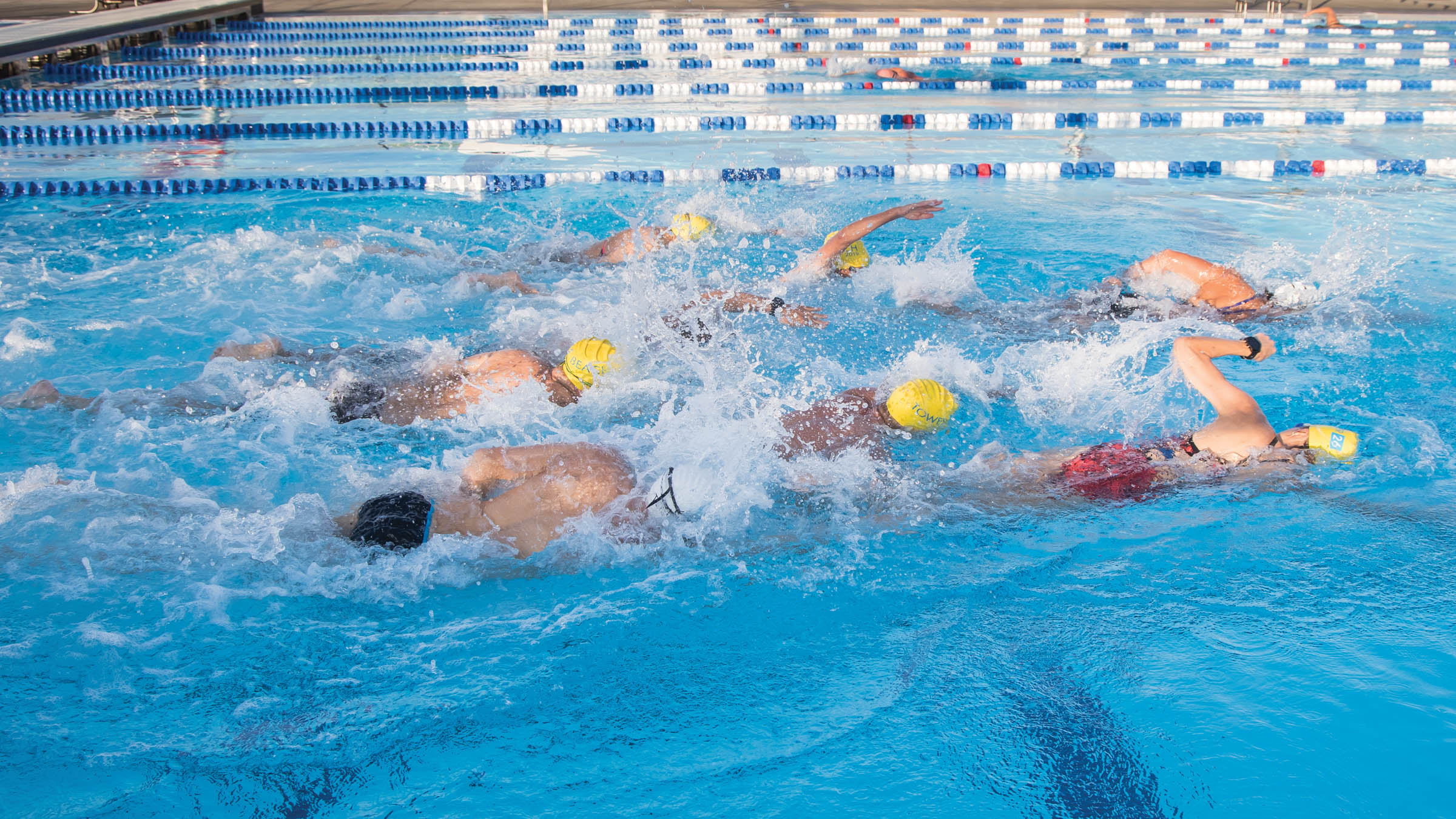 Pack swimming in a pool